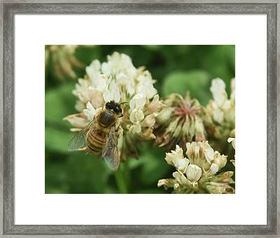 Framed Print featuring the photograph Honey Bee by Pamela Walton