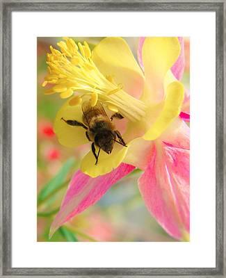 Honey Bee's Columbine Bloom Framed Print by Honey Behrens