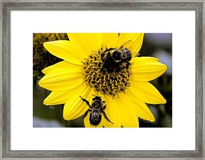 Honey Bees Framed Print