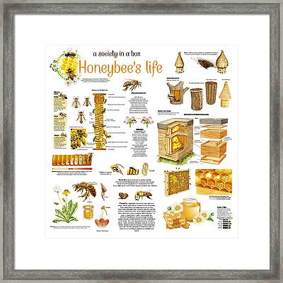 Honey Bees Infographic Framed Print by Gina Dsgn