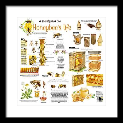 Honeybee Colonies Framed Prints