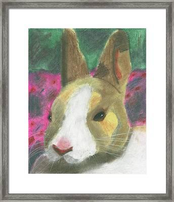 Honey Bunny Framed Print
