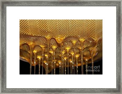 Framed Print featuring the photograph Honey Drip by Stephen Mitchell