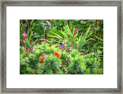 Framed Print featuring the photograph Honey Eater, Bushy Lakes by Dave Catley