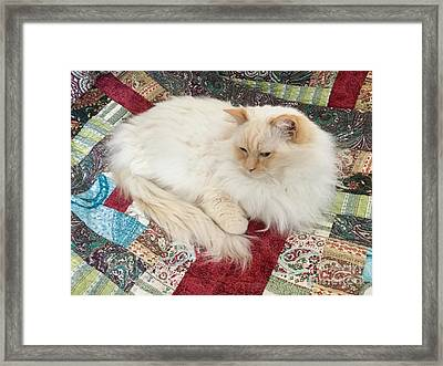 Honey My Helper Framed Print