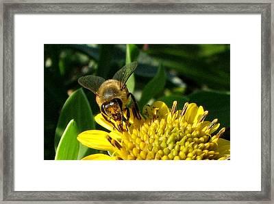Honey Starts Here Framed Print