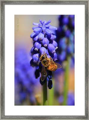 Honeybee In A Sea Of Blue Framed Print by Chris Berry