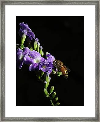 Framed Print featuring the photograph Honeybee On Golden Dewdrop by Richard Rizzo