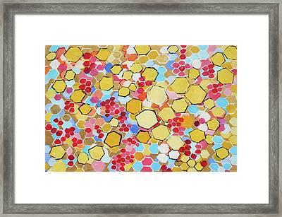 Honeycomb 201755 Framed Print by Alyse Radenovic