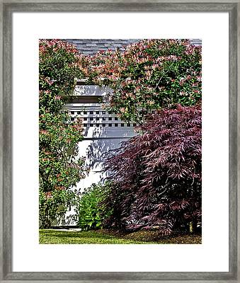 Honeysuckle And Maple Framed Print by Mark Coran