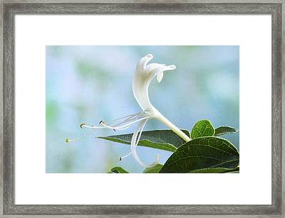 Framed Print featuring the photograph Honeysuckle Portrait. by Terence Davis