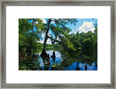 Hontoon Dead River Framed Print