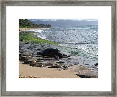 Honu At Laniakea Framed Print by Grant Wiscour