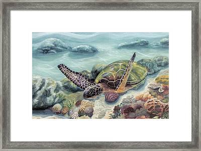 Honu In Midflight Framed Print by Manupupule