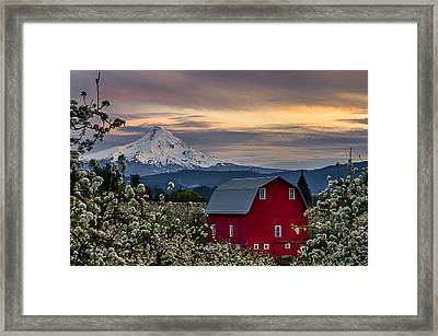 Hood River Pear Orchard Framed Print by Exquisite Oregon