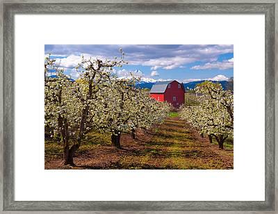 Hood River Spring Morning Framed Print