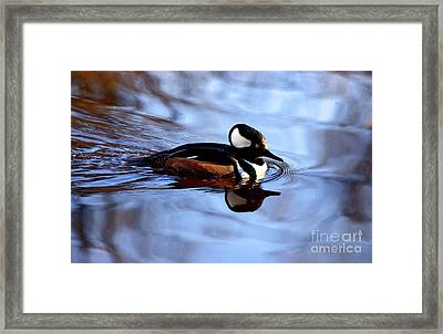 Hooded Merganser In Stanley Park Framed Print