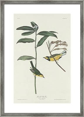 Hooded Warbler Framed Print