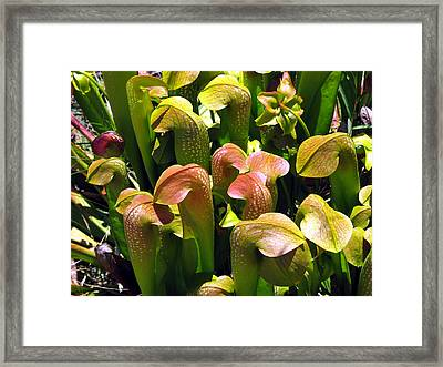 Framed Print featuring the photograph Hoodies by Peg Urban