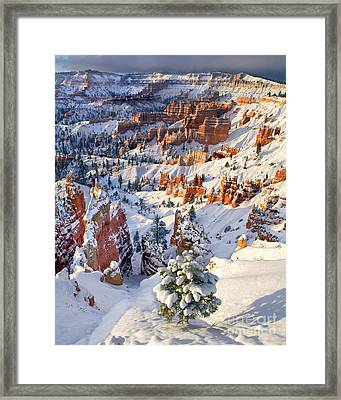 Framed Print featuring the photograph Hoodoos And Fir Tree In Winter Bryce Canyon Np Utah by Dave Welling