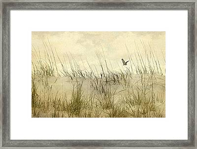 Hoo's Who Framed Print by Diana Angstadt