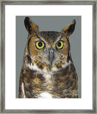 Hoot-owl - I'm Looking At You Framed Print by Merton Allen
