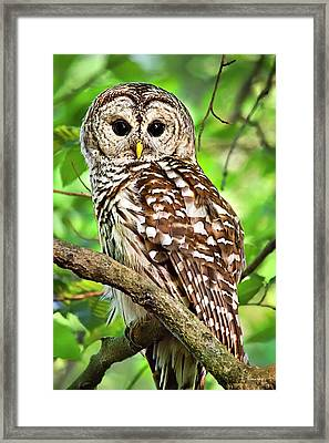 Framed Print featuring the photograph Hoot Owl by Christina Rollo
