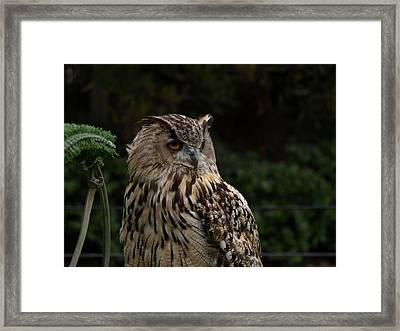 Hoot Owl Framed Print by Laura Allenby