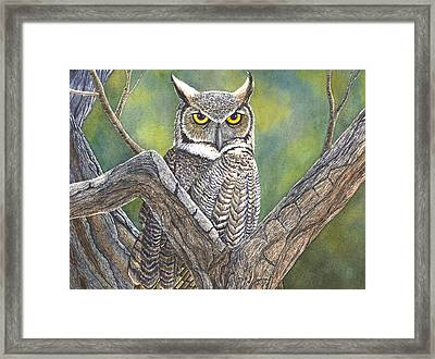 Hooter Framed Print by Catherine G McElroy