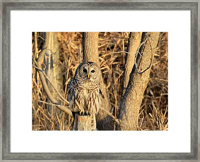 Hooter Framed Print by Thomas Danilovich