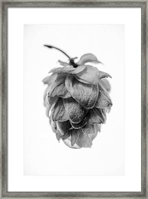 Hop 4 Framed Print by Matthew Graves