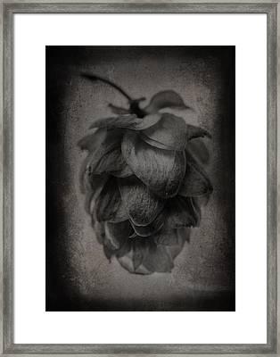 Hop 5 Framed Print by Matthew Graves