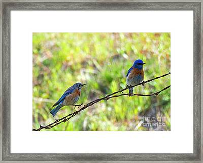 Hop On Over Framed Print