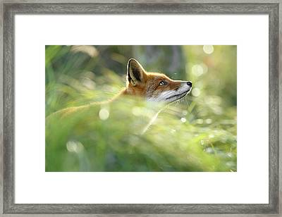Hope - All Good Things Come From Above Framed Print by Roeselien Raimond