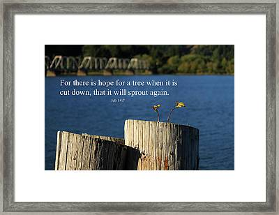 Hope For A Tree Framed Print by James Eddy