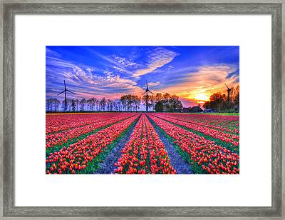 Hope Of Spring Framed Print by Midori Chan