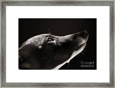 Hopeful Framed Print by Angela Rath