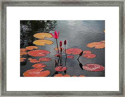 Framed Print featuring the photograph Hopefully Ever After by Michiale Schneider