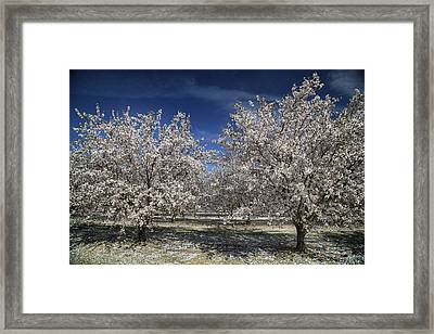 Hopes And Dreams Framed Print by Laurie Search
