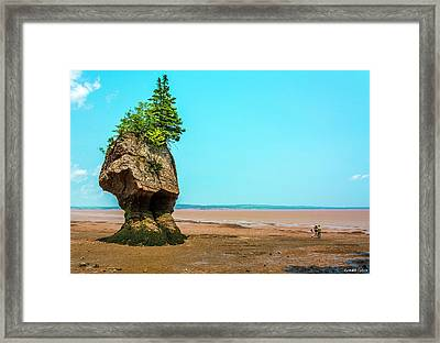 Hopewell Rocks In New Brunswick -  Canada Framed Print