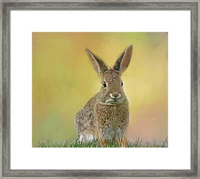 Hoppy Spring Framed Print