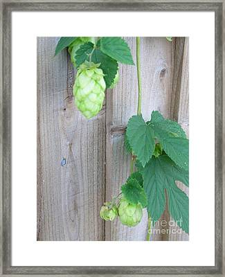 Hops On Fence Framed Print