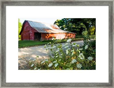 Horizontal Queen Anne's Lace Framed Print by Parker Cunningham