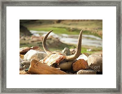 Horn And Valley Tibet Yantra.lv Framed Print by Raimond Klavins