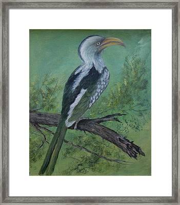 Hornbill Framed Print by Rita Palm