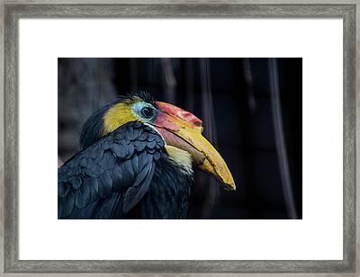 Framed Print featuring the photograph Hornbilled Bird by Scott Lyons