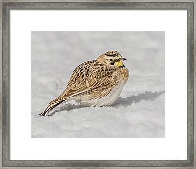 Horned Lark On The Snow Framed Print