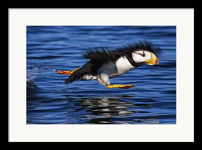 North American Wildlife Framed Prints