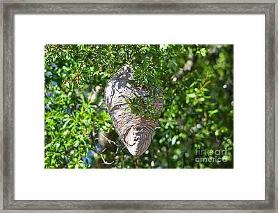 Framed Print featuring the photograph Hornets Home by Al Powell Photography USA