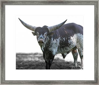 Horns And Balls  Framed Print